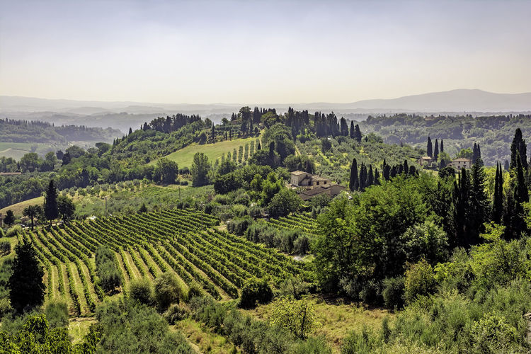 vineyards and