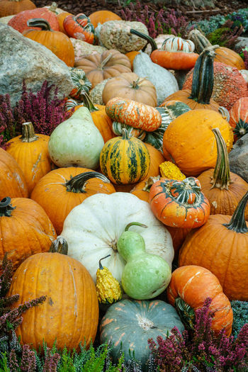Various type of pumpkin Abundance Autumn Choice Close-up Day Food Food And Drink Freshness Fruit Gourd Halloween Healthy Eating Large Group Of Objects Market No People Outdoors Pumpkin Squash - Vegetable Vegetable