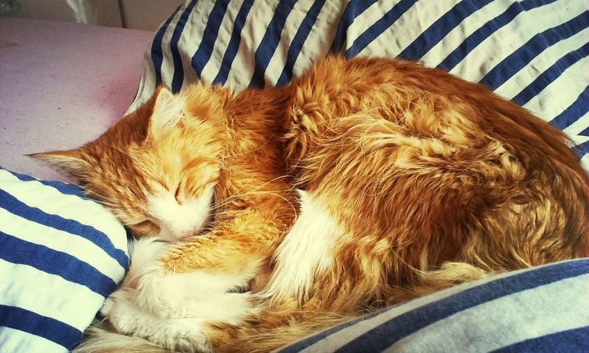 abused and abandoned cat is safe now <3 <3 <3