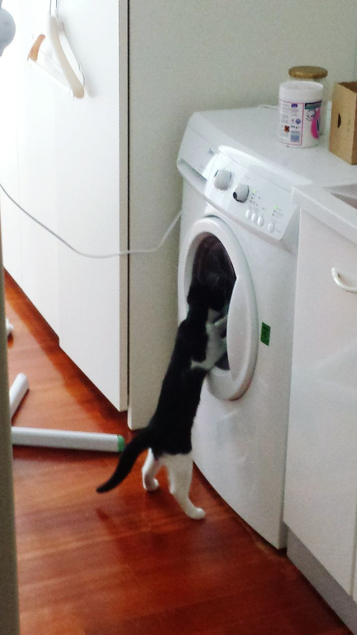 washing machine, indoors, domestic animals, one animal, animal themes, pets, home interior, technology, full length, one person, mammal, day, people