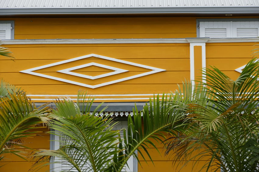 Architecture Building Exterior Built Structure Close-up Day Growth Nature No People Outdoors Palm Tree Plant Sky Tree Yellow