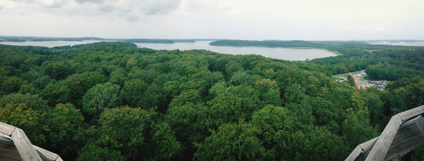 Great Views Woods
