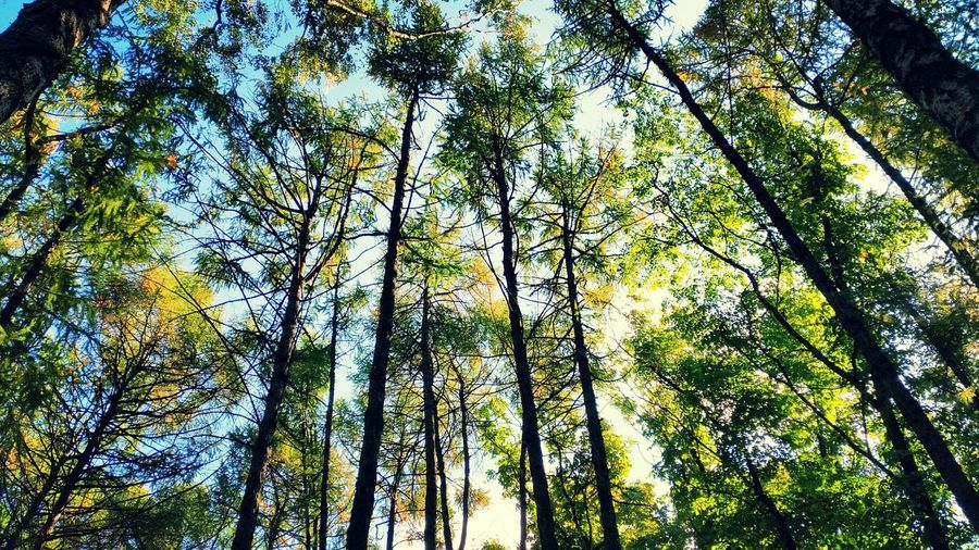 Nature Природа Лес Forest