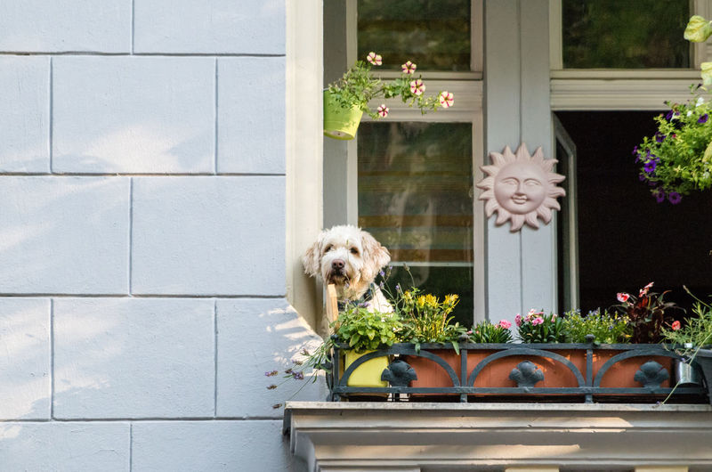 Dog in front of door. Ways Of Seeing Animal Animal Themes Architecture Built Structure Canine Day Dog Domestic Domestic Animals Door Entrance Flower Flower Pot Flowering Plant Mammal Nature No People One Animal Outdoors Pets Plant Potted Plant Small 2018 In One Photograph Streetwise Photography My Best Photo