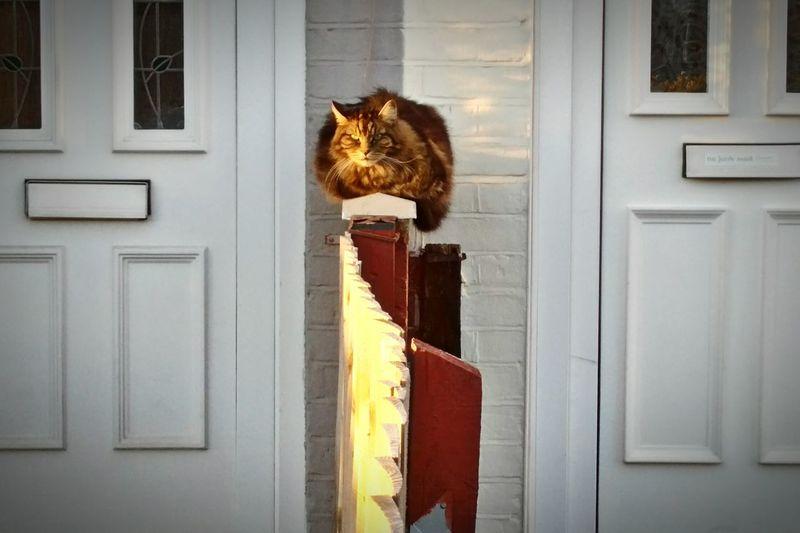 Cat Over