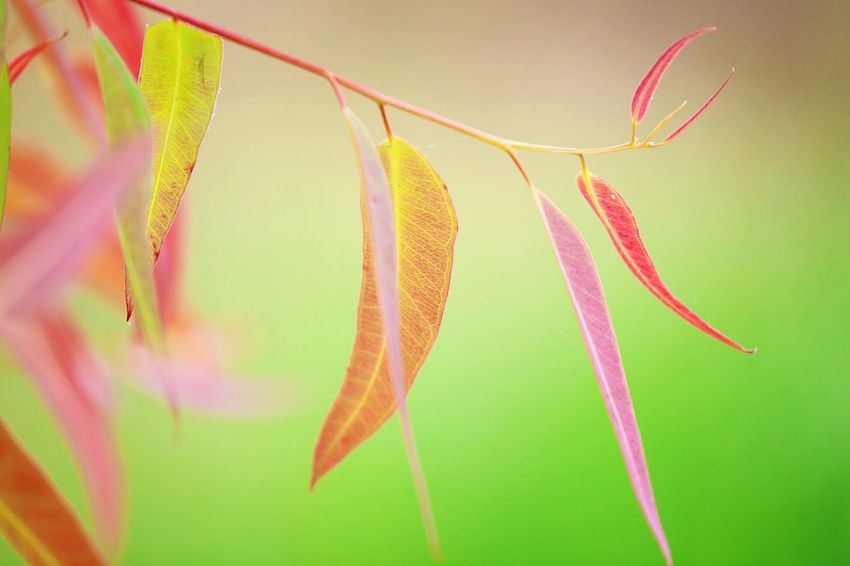 Close-up No People Plant Beauty In Nature Growth Yellow Leaf Nature Plant Part