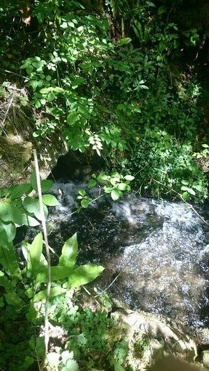 Nature Woods Water Bridge