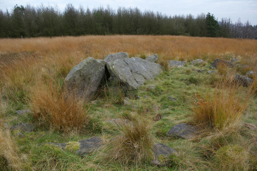 The remains of an ancient burial ground at the top of the moors at Rivington, England. Field Nature Rural Scene Landscape Growth Beauty In Nature Tree Day Outdoors No People Tranquility Tranquil Scene Grass Pike Stones Burial Stones Burial Ground Ancient Burials Ancient Burial Ground English Countryside