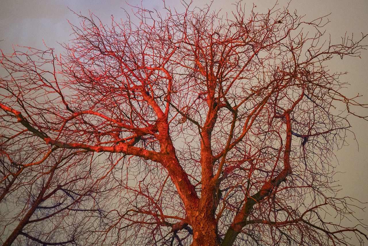 bare tree, branch, tree, beauty in nature, nature, low angle view, autumn, tranquility, no people, outdoors, sky, scenics, day