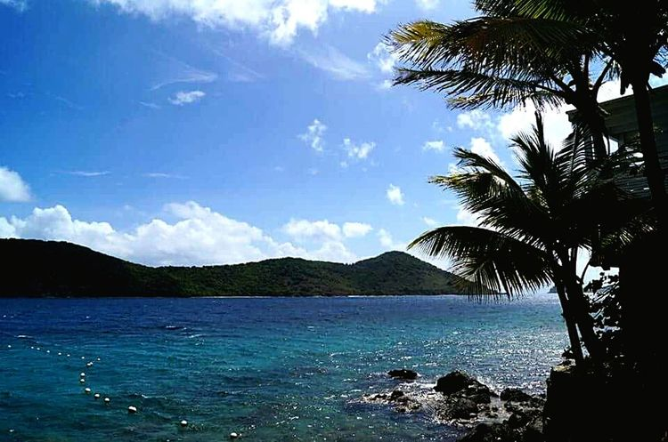 Nature out in St Thomas US Virgin Island Hello World Nature_collection Wanderlust Sealovers Coralworld Lifethroughmylenses Stthomas Carribean VirginIslands Usvi #usvirginislands