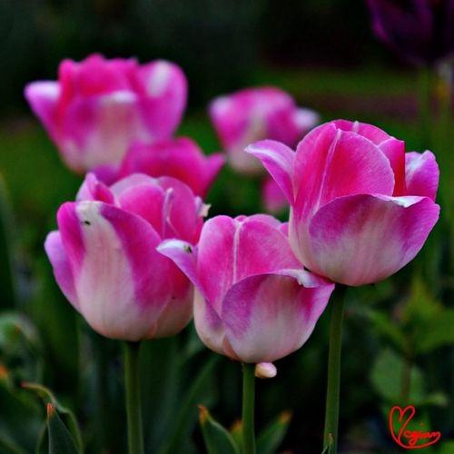 Flowers Landscape Photoyourworld