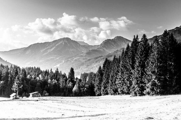 Austrian-German border near Tyrol. Mountain Landscape Forest Cloud - Sky Mountain Range Nature Outdoors Day Allgäu Allgäuer Alpen GERMANY🇩🇪DEUTSCHERLAND@ Alps Scenics Rural Scene Black & White Photography Tyrol-Austria Field No People Tree