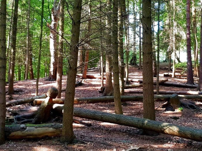 woodland Fallen