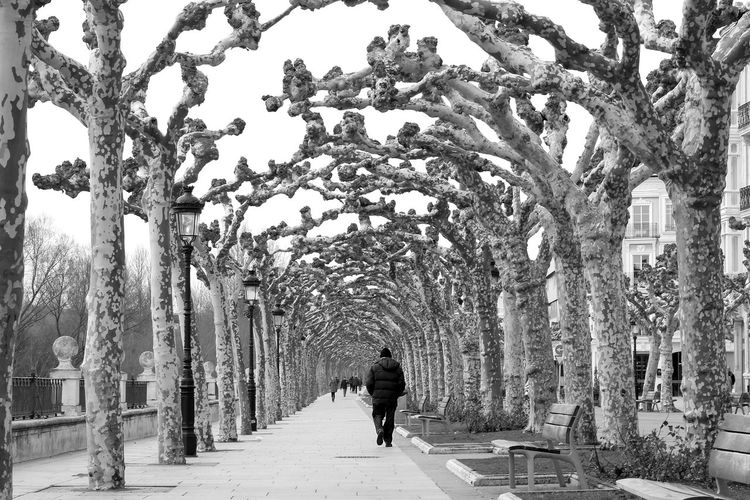 Rear View Of Man Walking On Walkway Amidst Trees During Winter
