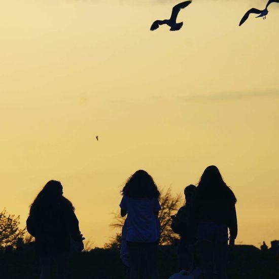 Bird Flying Sunset Silhouette Sky