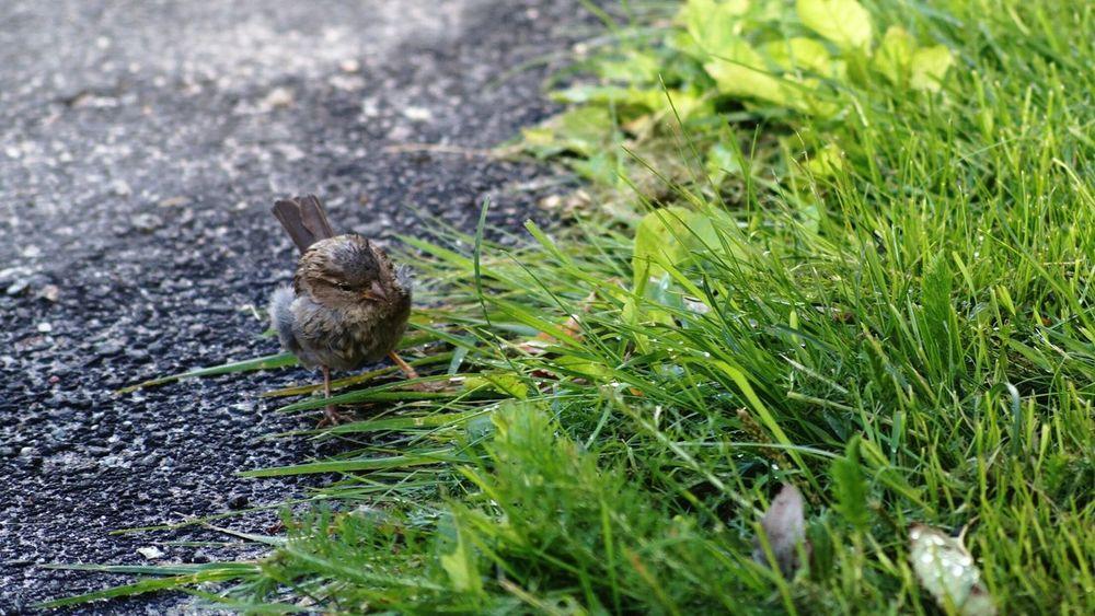Hagalund Sweden Solna EyeEm Birds Animals House Sparrow Showcase August Colour Of Life Rainy Days August 2016 Niklas Finding New Frontiers Adapted To The City BYOPaper! The Street Photographer - 2017 EyeEm Awards The Week On EyeEm Perspectives On Nature Summer Exploratorium