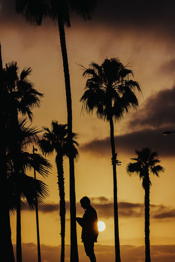 Erik Palm Tree Tropical Climate Tree Sky Silhouette Real People Lifestyles Plant One Person Nature Sunset Beauty In Nature Outdoors Land Cloud - Sky Tropical Tree Coconut Palm Tree