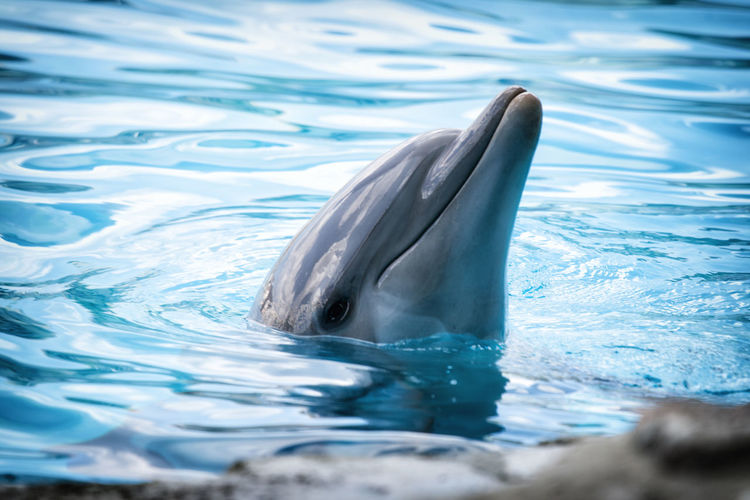 Close-Up Of Dolphin In Water