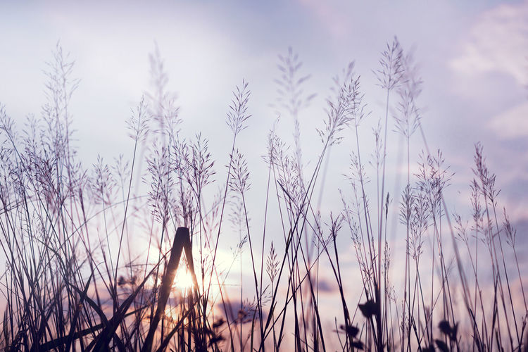 Vintage photo of abstract evening autumn nature background with wild flowers and plants in sunset, selective focus point, shallow depth of field Field Nature Plant Sunset_collection Vintage Style Countryside Evening Meadow Rural Scene Shillouette Sun Wild Flowers