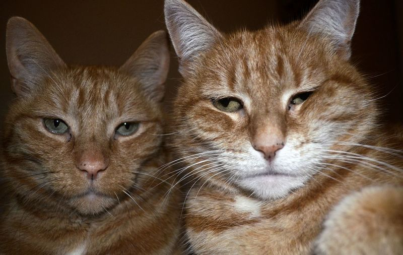 Gangsta cats.