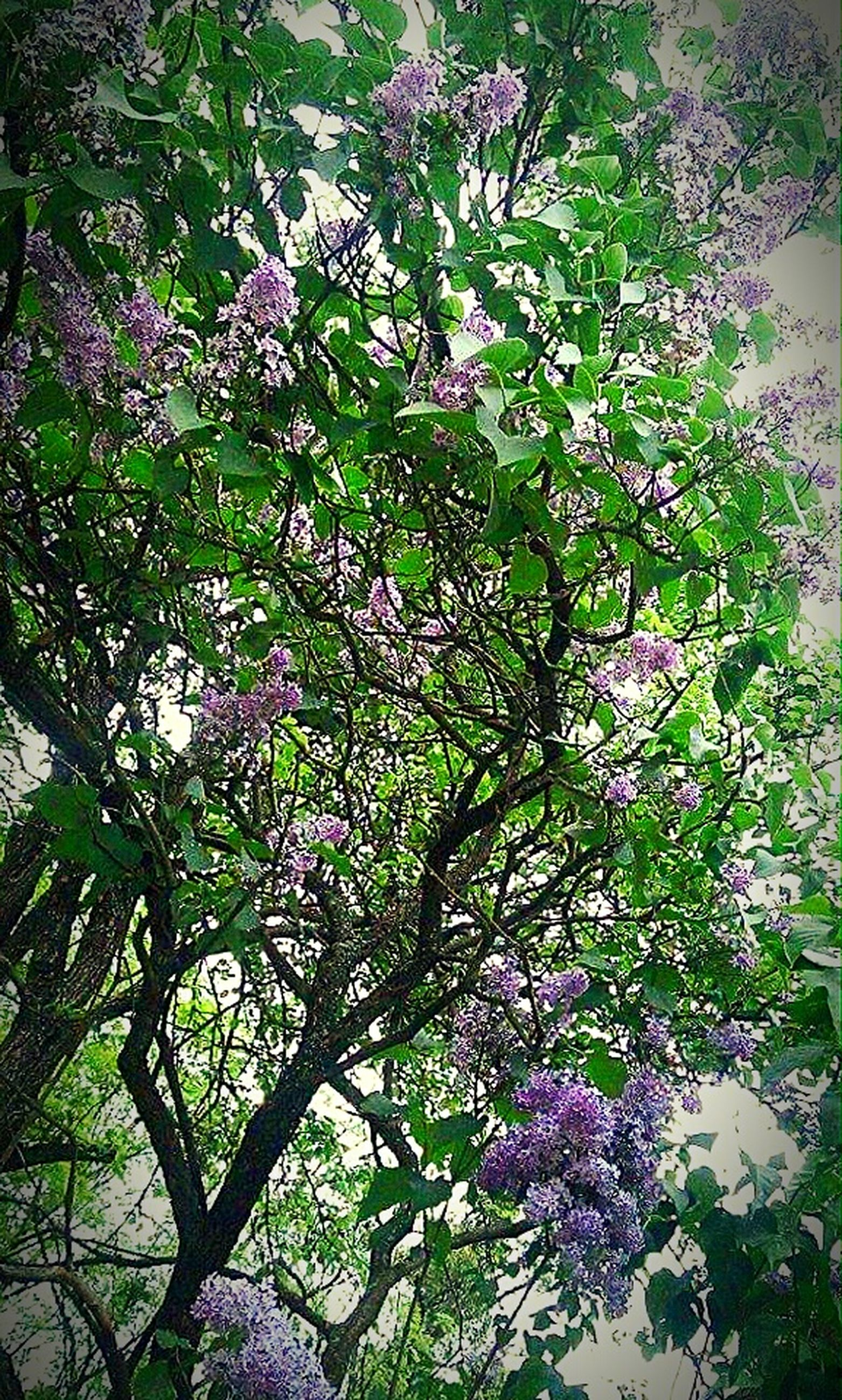 flower, growth, tree, branch, freshness, beauty in nature, nature, pink color, fragility, blossom, low angle view, plant, leaf, in bloom, blooming, day, outdoors, no people, sunlight, springtime