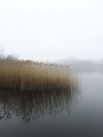 Nature Water Reflection Water Reflections Fog Foggy Winter Reeds Reed