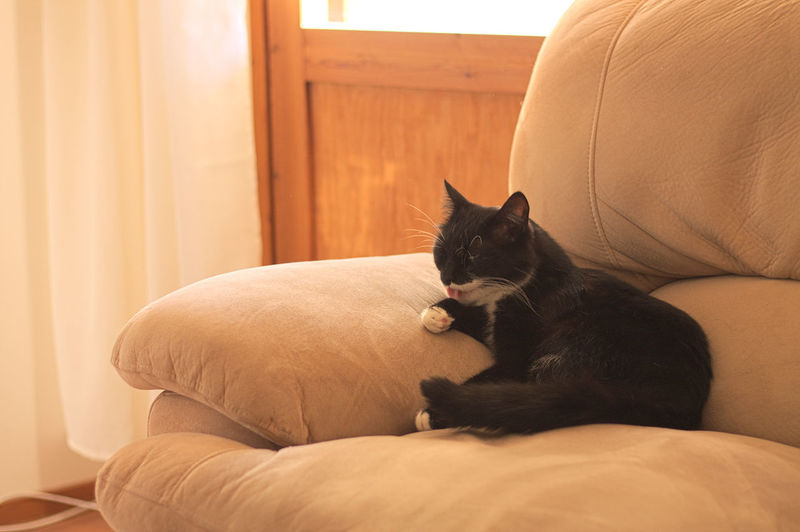 Cat Relaxing On Sofa At Home