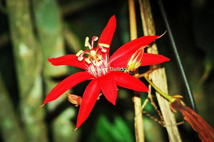 La flora es increíble y preciosa!! Travelling Travel Photography Viaje A Costa Rica Fotografia De Viaje