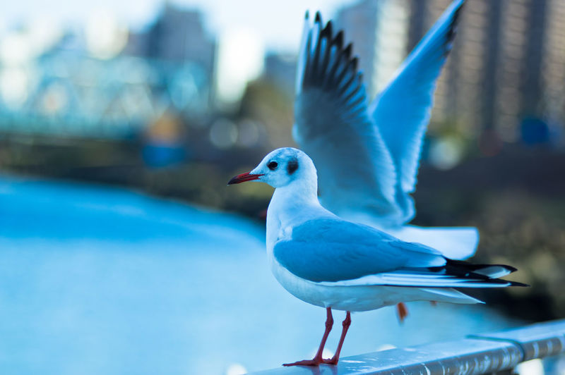 gulls Animal Animals In The Wild Bird Black-headed Gull Curiosity Gulls No People River Yurikamome