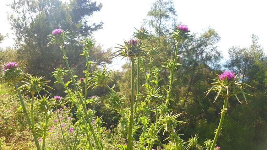 Flower Flower Head Tree Pink Color Sky Plant