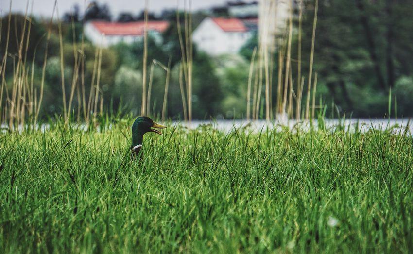 Bird on field