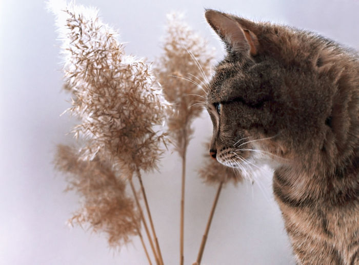 Close-up of a cat against white background