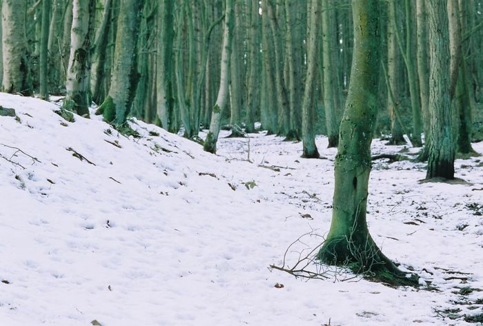 Castleton Cold Temperature Snow Winter Forest Tree Trunk Nature Tree Frozen WoodLand Landscape Outdoors Day Beauty In Nature No People Snowing Carl Zeiss Sonnar T* 2.8/135mm