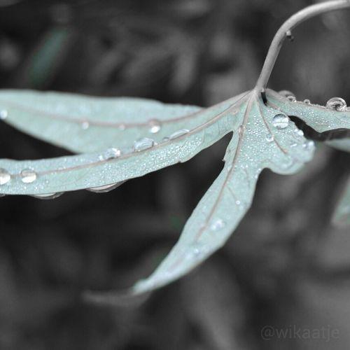 drops Raindrops