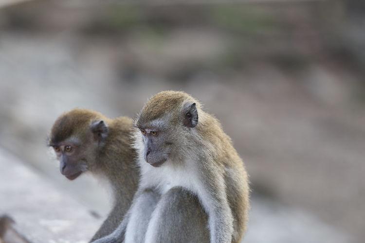 Monkey looking away outdoors