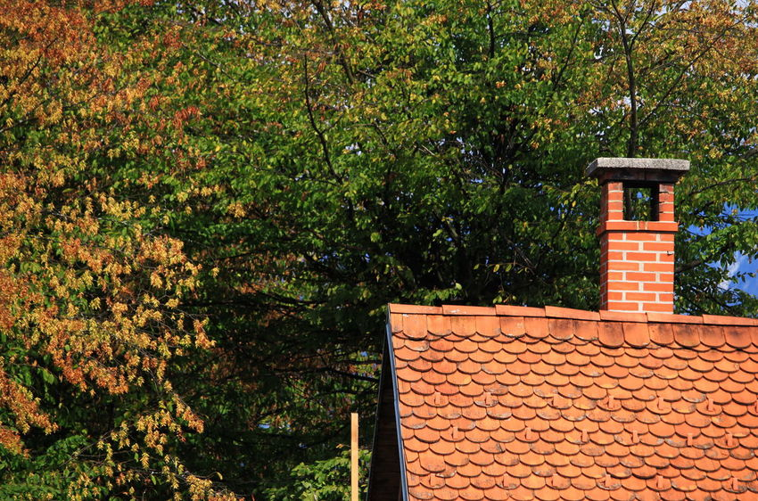 Slovenia Architecture Building Exterior Built Structure Day Green Color House No People Outdoors Plant Radovljica Roof Roof Tile September 2018 Tree
