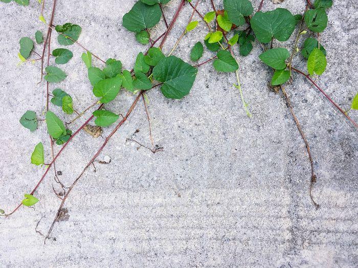 Ground Leaf