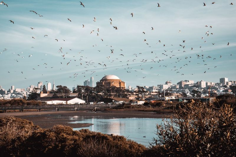 Birds in San Francisco Picture Photography Sanfrancisco Bird City Sky Nature Cityscape Building No People First Eyeem Photo