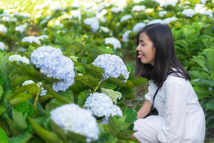 Licking Cute Hydrangea Flower Hydrangea Garden Flower Lace Plant Young Adult One Person Women Adult Smiling Young Women Day Nature Flowering Plant Casual Clothing Lifestyles Black Hair Happiness Freshness Hair Growth Long Hair Hairstyle Outdoors Beautiful Woman