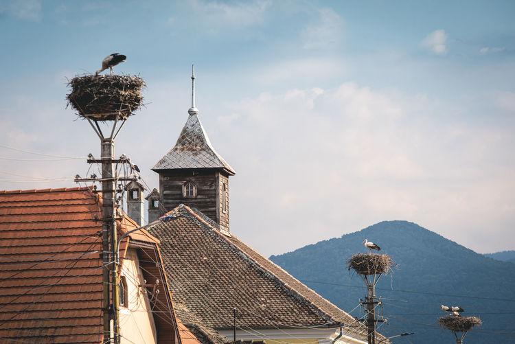 Storcks in nests on lamp posts