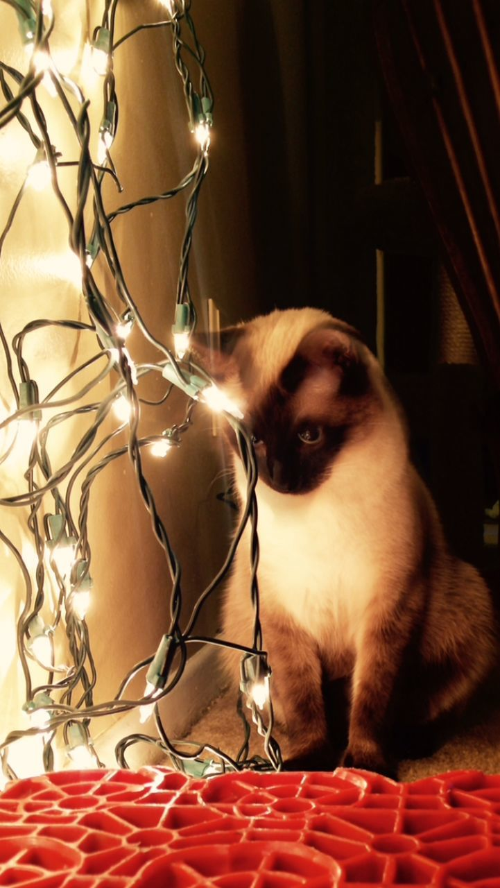 pets, domestic animals, one animal, animal themes, indoors, mammal, domestic cat, bed, home interior, feline, no people, day, bedroom, siamese cat, close-up