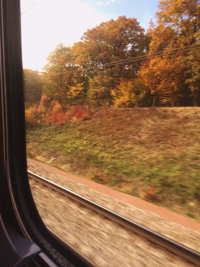 Autumn Autumn Colors Autumn Leaves Traveling Travel Train Speed Leaves Nature Nature_collection Hello World Taking Photos Enjoying Life Check This Out