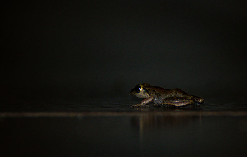Close-up of a turtle in water