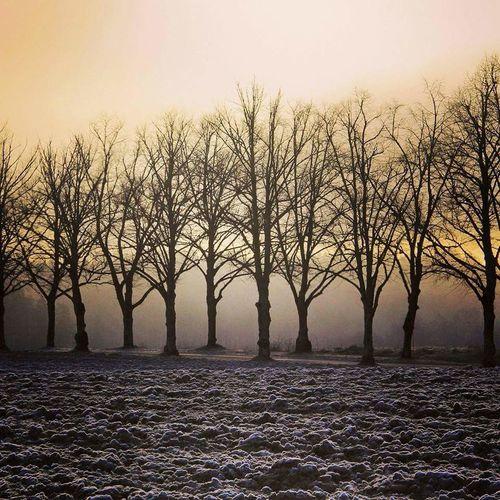 Sweden Foggy