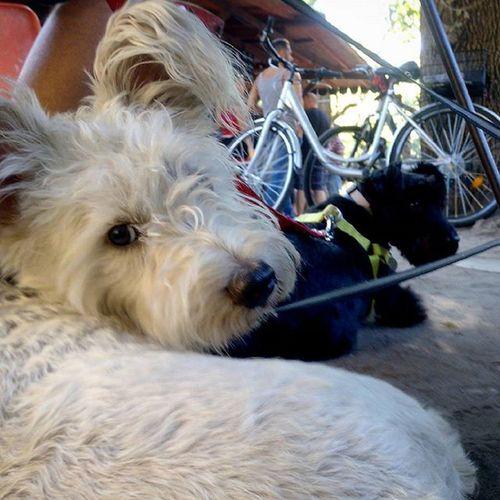 Piknikelünk kutyásan. Kertem Piknik Kutyabaratpiknikesvasar Savekertem Rescuedog AdoptDontShop Welovebudapest