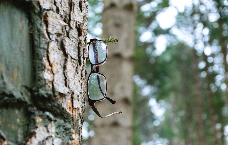 Eyeglasses hanging on the pine tree.
