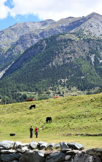 Breeders and cows in Italian Alps Pasture Alps Beauty In Nature Breeders Cattle Breeders Day Environment Green Color Land Landscape Mountain Mountain Peak Mountain Range Nature Non-urban Scene Outdoors People Plant Real People Rock Scenics - Nature Sky Tranquil Scene Tranquility