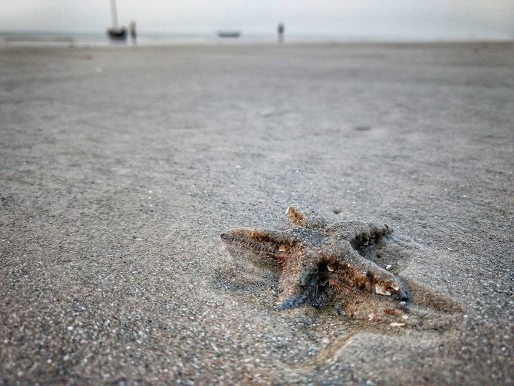 Sand Beach Nature Close-up Starfish At Beach Starfish  Morning Sky Eastcoast Signoflife Ocean Motorolaphotography Beachphotography Horizon Over Water Beach Life Life Lowtides India Close Up Technology