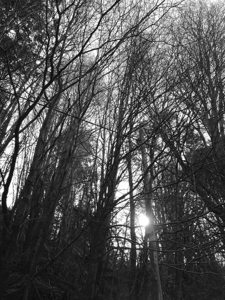 Beauty In Nature Scenics Non-urban Scene Nature Tranquil Scene Bare Tree Low Angle View Forest Tree Blackandwhite Photography Black & White Ushuaia Tierradelfuego Ushuaia Paisaje Argentina 👑🎉🎊👌😚😍 Fin Del Mundo Ushuaïa Ushuaia Arg. Argentina Photography Ushuaia Argentina Argentina Majestic Nature Finding New Frontiers