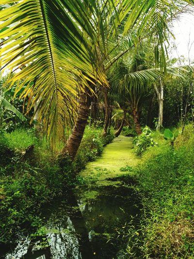 Vietnamphotography Mekong-delta Mekong Delta Canal Mekong